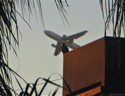 Is It a Bird Is It a Plane 2014