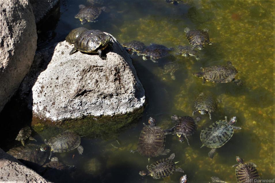 Turtles 2013