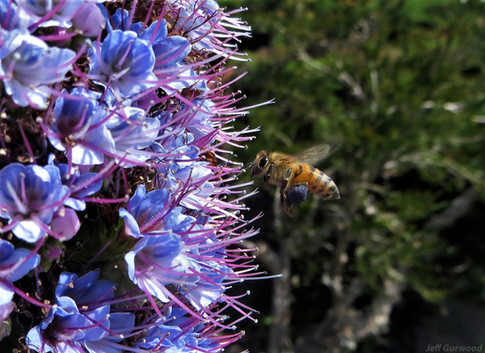 Bees 2013 1