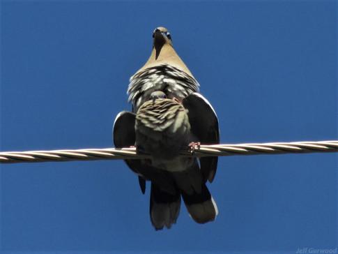 Tandem Birds 2011