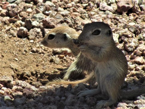 Cute Rodents 2011