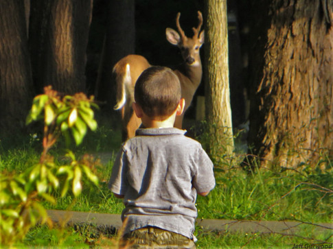 Deer Stare Down 2017
