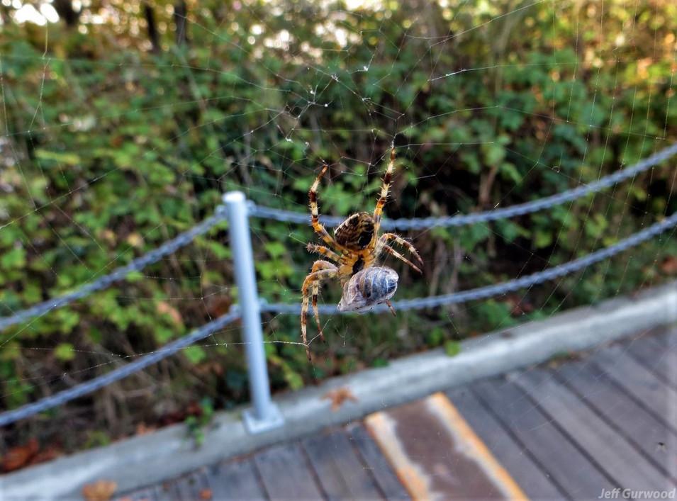 Big Spider 2015
