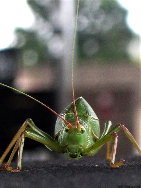 Giant Bug Friend 2006 1