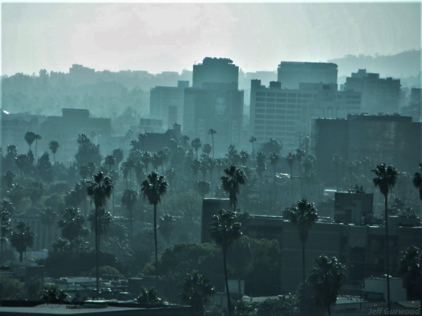 Foggy Hollywood 2014