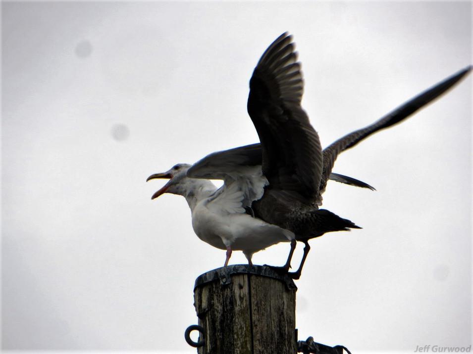 Bird Violation 2015