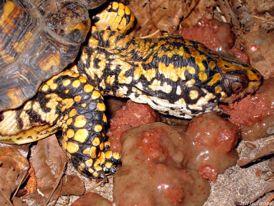 Turtle Dog Food 2002