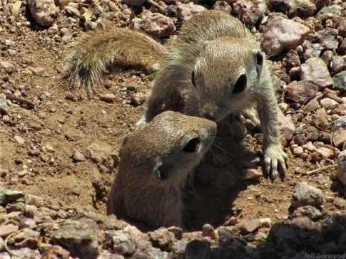 Cute Rodents 2011 2