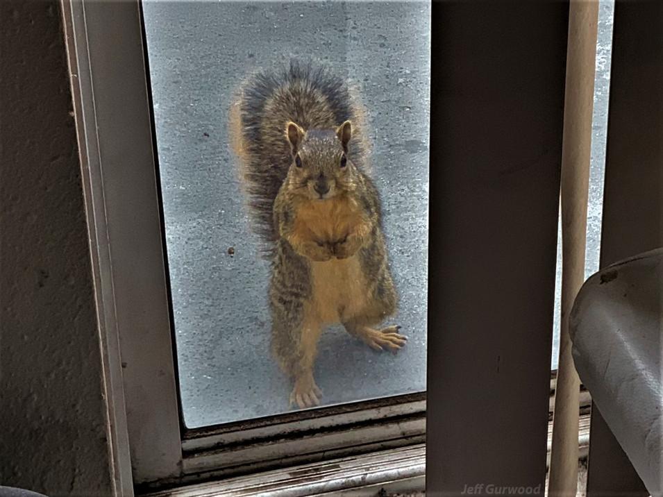 Intimidating Squirrel 2018