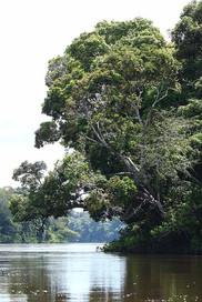 Suriname 22.jpg