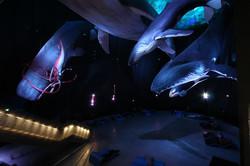 Ozeaneum Wale