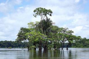 Suriname 21.jpg
