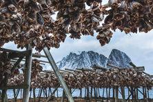 Trockenfisch Norwegen.jpg