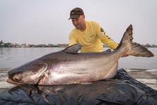 Mekong Catfish.jpg