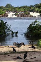 Suriname 49.jpg