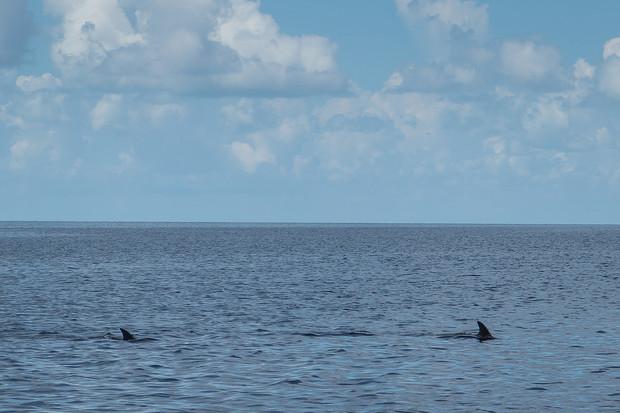 Florida26.jpg