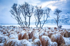 Lofoten Winter.jpg