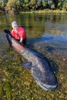 Angler Wels.jpg