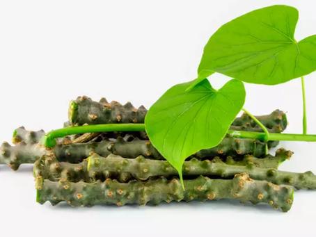 Health Benefits of Guduchi (Giloy) Stem Powder