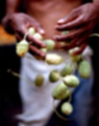 hands&greens.s.jpg