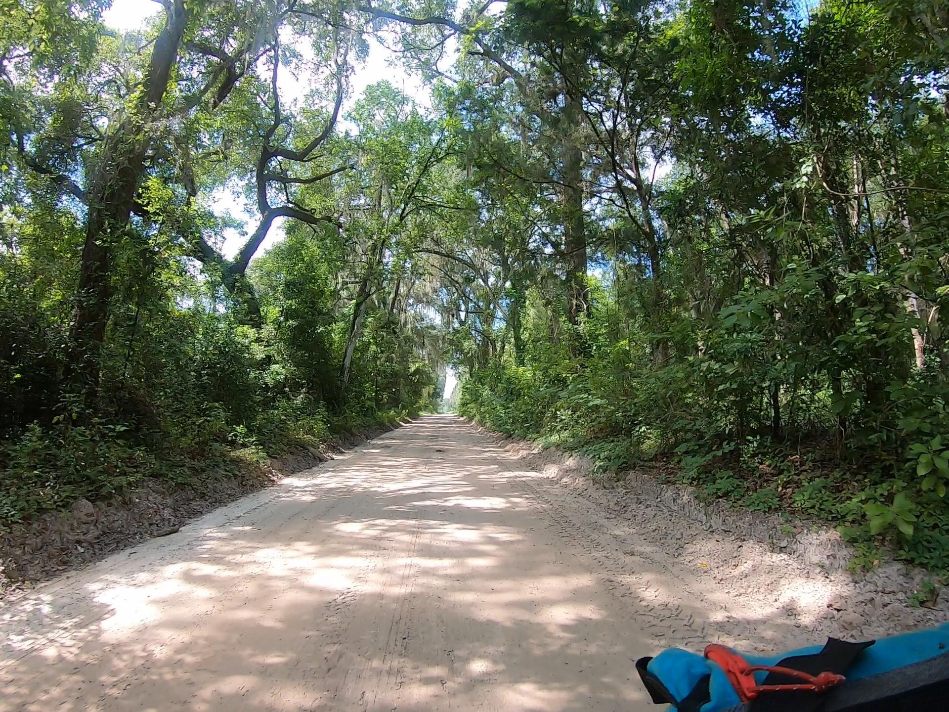roads of ivy