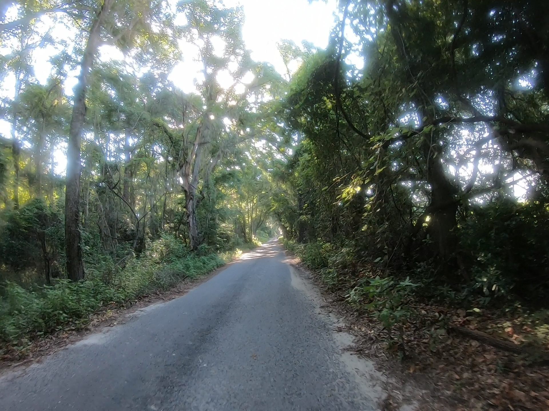 tree tunnel rough road
