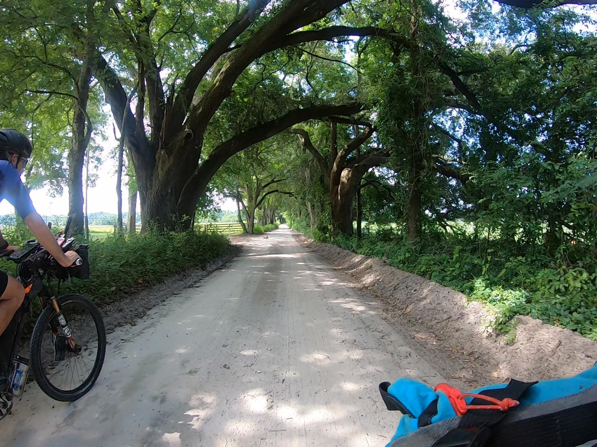 oak canopy dirt roads