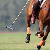 Cavalo que funciona com o malho de polo