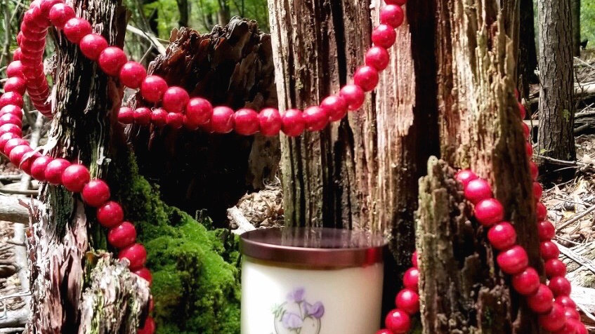 Cranberry Forest