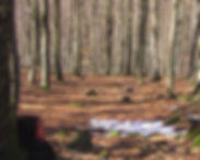 blackforestthumb.jpg