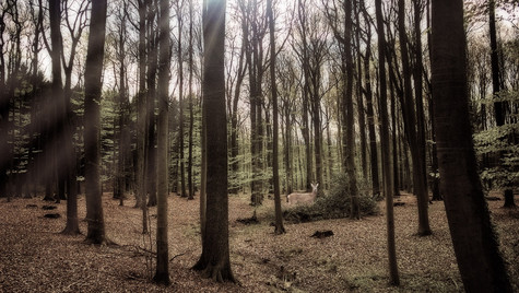Wenn Der April In Den Wald Kommt