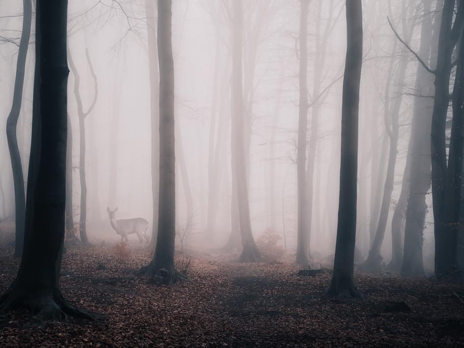 Reh im Nebel