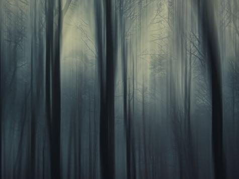 Waldnächte