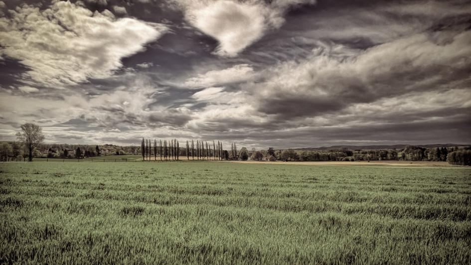 Auf Weiten Feldern