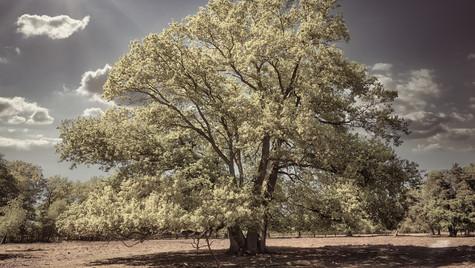 Wenn Bäume Einsam Sind...