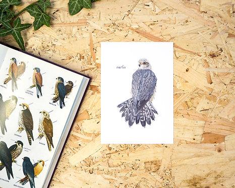Merlin Postcard // Mini Print