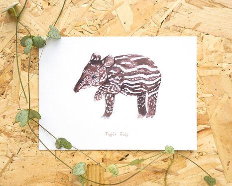 Tapir Calf Postcard // Mini Print