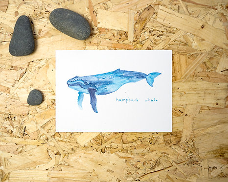 Humpback Whale Postcard // Mini Print