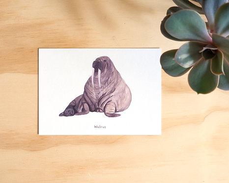 Walrus Postcard // Mini Print