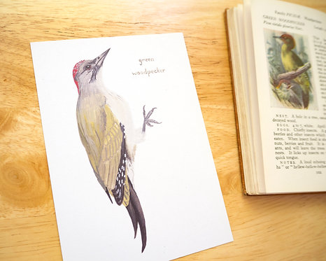 Green Woodpecker Postcard // Mini Print