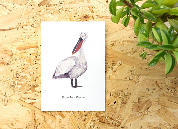 Dalmatian Pelican Postcard // Mini Print