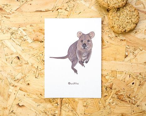 Quokka Postcard // Mini Print