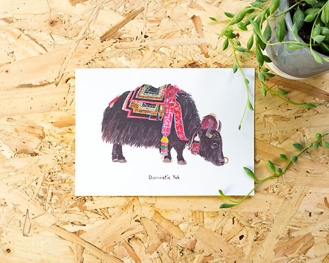 Domestic Yak Postcard // Mini Print