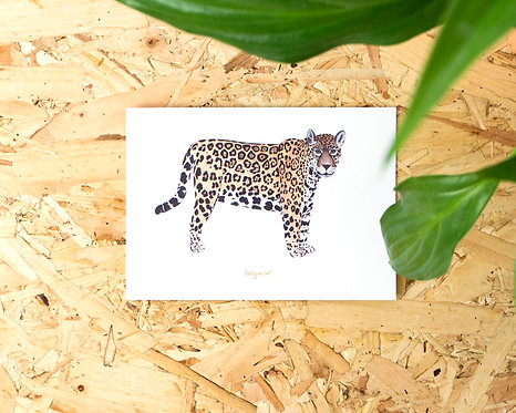 Jaguar Postcard // Mini Print