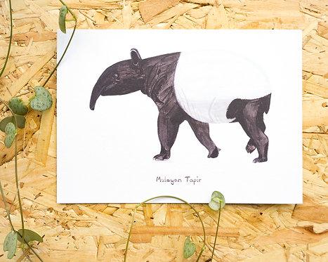 Malayan Tapir Postcard // Mini Print