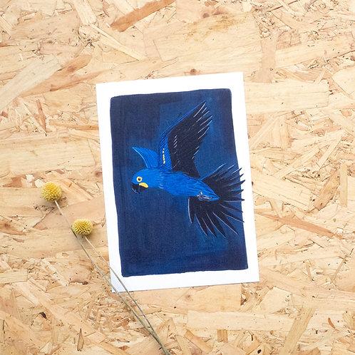 Hyacinth Macaw Print // A5
