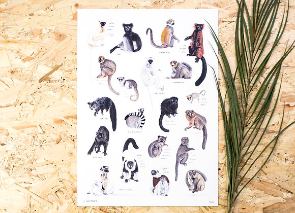 Lemurs of Madagascar Print A4 // A3