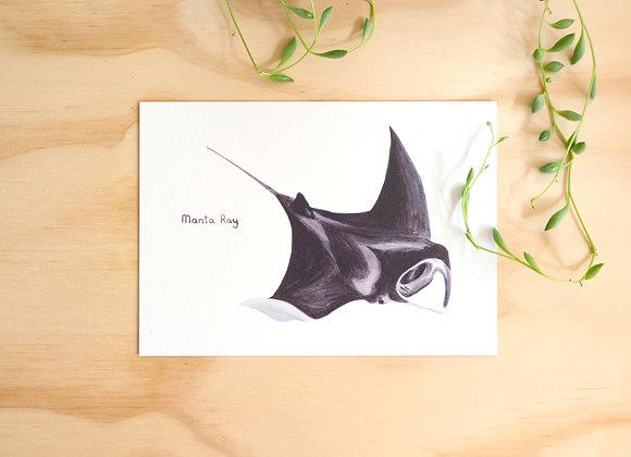 Manta Ray Postcard // Mini Print