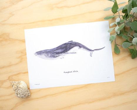 Humpback Whale Print // A4 or A3