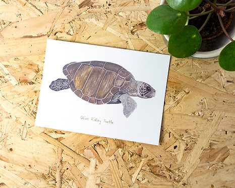 Olive Ridley Turtle Postcard // Mini Print